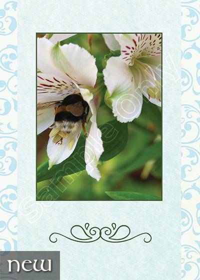 Products – Inisfail Greeting Cards